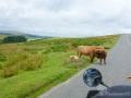 Noch mehr Tiere am Wegesrand oder besser auf dem Weg