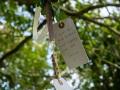 Der Wunschbaum von Avebury