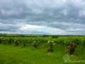 An der Weinstraße ziehen wieder Wolken auf